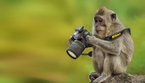 animaux apprentis photographes