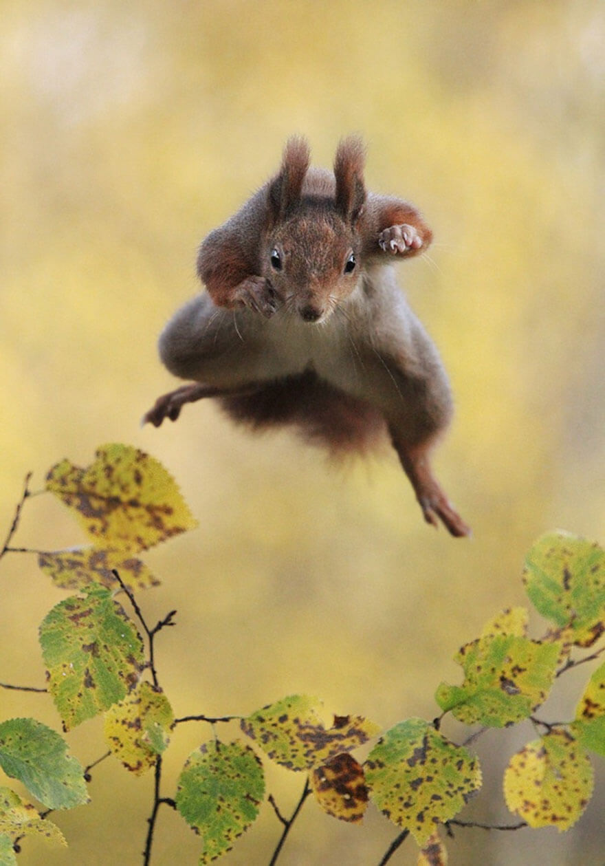 Photos drôles d'animaux, Comedy Wildlife Photography Awards 2015